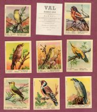 TRADE cards set Birds of the World 1957 by VAL Gum
